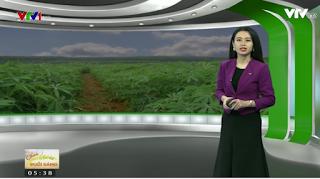 Bản tin thời tiết nông vụ sáng ngày 24/10/2017